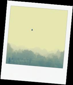 mist met vogel polaroid 2